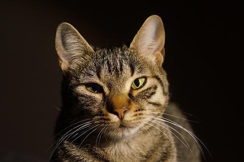 cat-1041324_960_720.jpg
